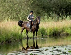 Centre équestre et poney Club de la Virevolte