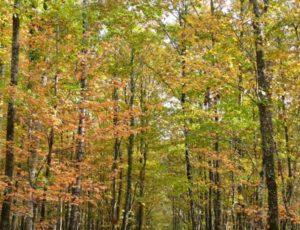 Forêt de Châteauroux