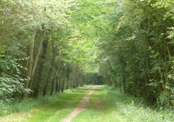 Le bois de la Ringoire – Bois de Brassioux