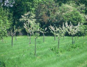 Les jardins de Chambon – jeune plantation d'arbres fruitiers