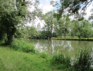 Les prairies de l'Arnon – L'Arnon
