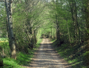 Sentier le long de la Couarde