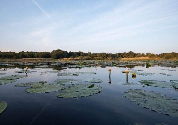 étang Neuf -domaine du Plessis