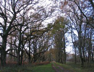 Chemin de l'étang Vieux-GDT-01