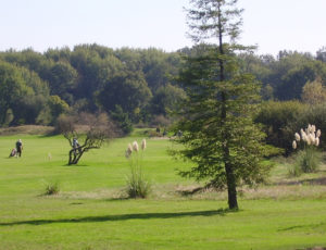 Golfpicardiere