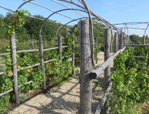 Labyrinthe de vignes