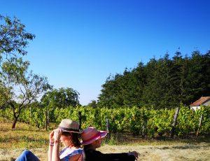 vignes beauregard