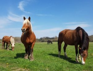 Laleuf équitation