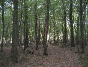 Gîte Les Fonteneilles – Bouesse