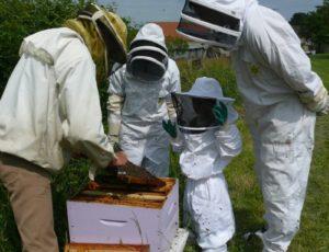 Maison des abeilles à Ingrandes
