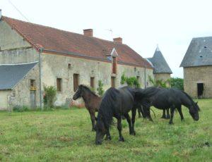 Meublé de tourisme Accueil Paysan n°061 09 001 – 03 08 – 3