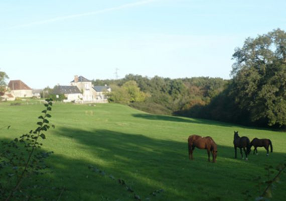 Montgenoux-chevaux
