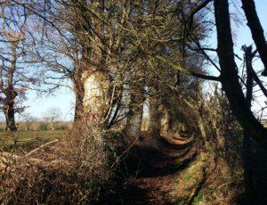 Neuvy chemin Transberrichonne