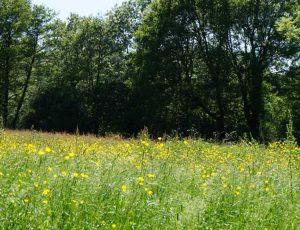 Paysage et randonnée en Pays de George Sand – Indre – Berry