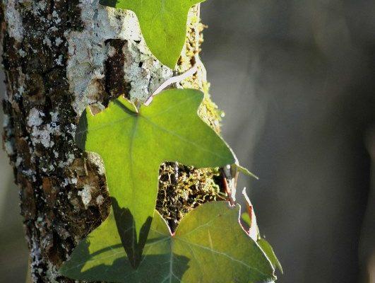 Plantes bio-indicatrices-F.Genot