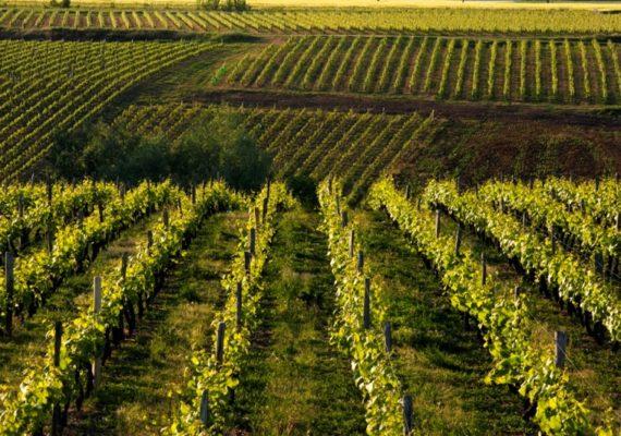 Produit Reuilly, lumière sur un vin au coeur du Berry