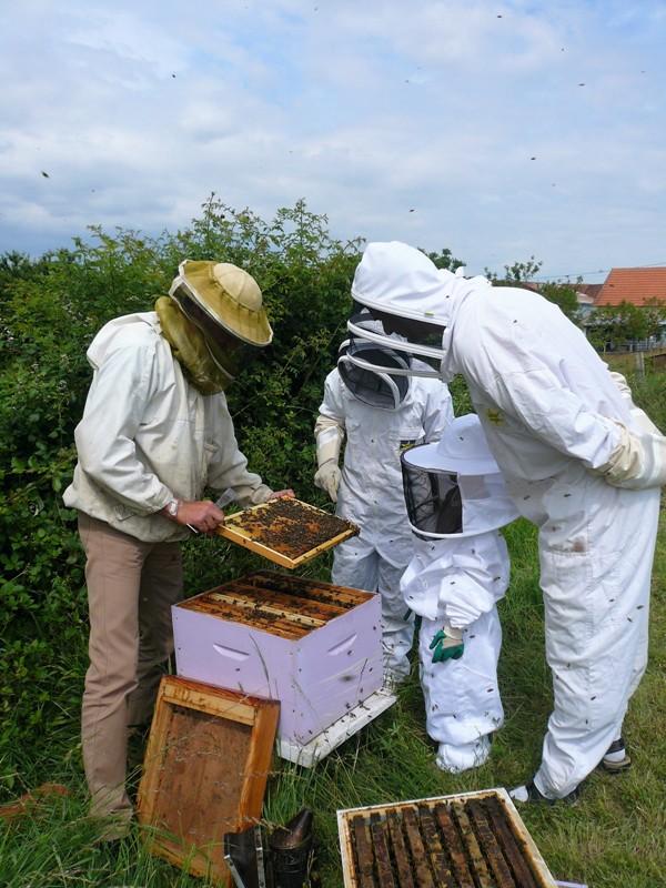 Safari abeilles