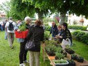 Troc aux plants à Saint-Aigny FMACEN036FS0000T