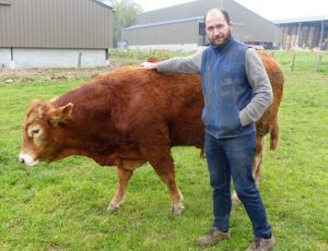 Vache-tilly-copie
