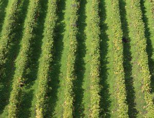 Vignoble-Sancerre-Victoire-Jacquot–45-