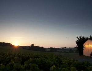 Vignobles Berthier 1