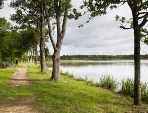 Plumages humides au creux de la roselière – Chaussée à l'étang Duris