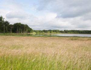 Plumages humides au creux de la roselière – Prairie à l'étang Duris
