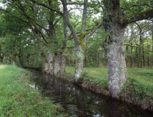 Aux portes de la Brenne – Canal le long d'un chemin