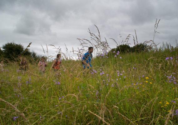 De vallons en brandes – Au travers des hautes herbes