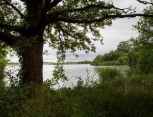 De vallons en brandes – L'étang de la Grande Gorce