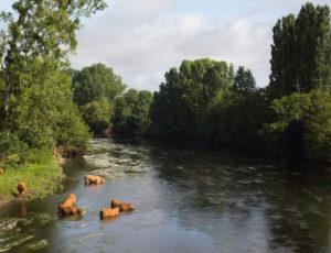 Entre Creuse et Suin – La Creuse à Tournon St Martin