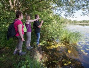 Luxuriances marécageuses –  Au bord de l'étang Vieux