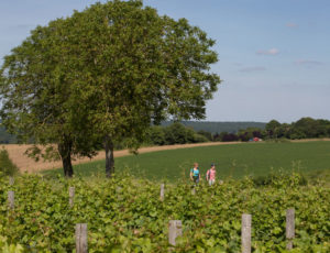 Le coteau aux loges de vigne – Vigne et loge de vigne