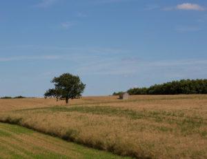 Le coteau aux loges de vigne – Loge de vigne perdu dans les champs