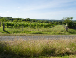 Terres de vignerons – Vigne encore cultivée