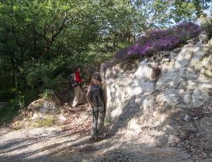 L'Anglin, de roches en roc – Bord de chemin
