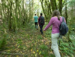 La Creuse entre val et coteau -Chemin de mousse