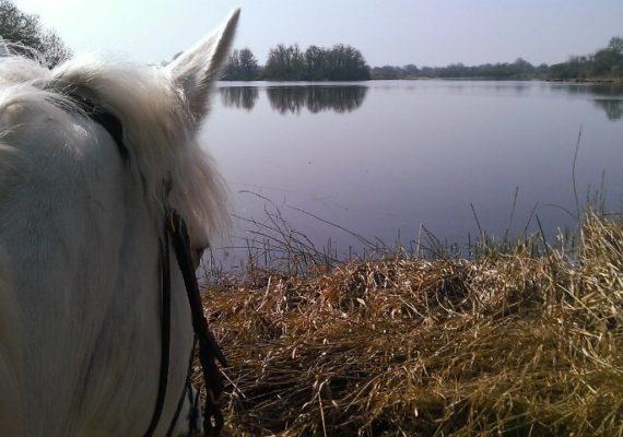 Bois Retrait randonnée à chevaley