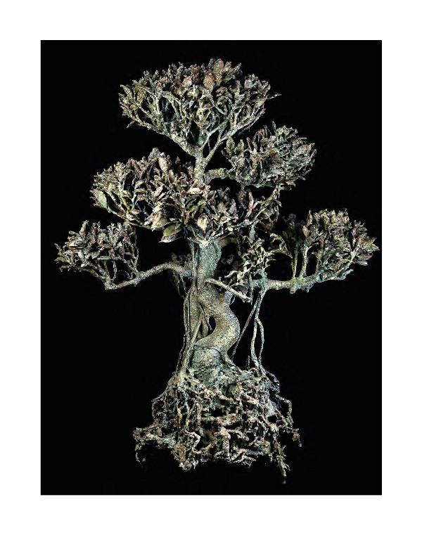 arbre sitbon_mouln de la filature