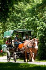 attelage au pole du cheval et de lane