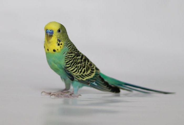 bird-3967171–480