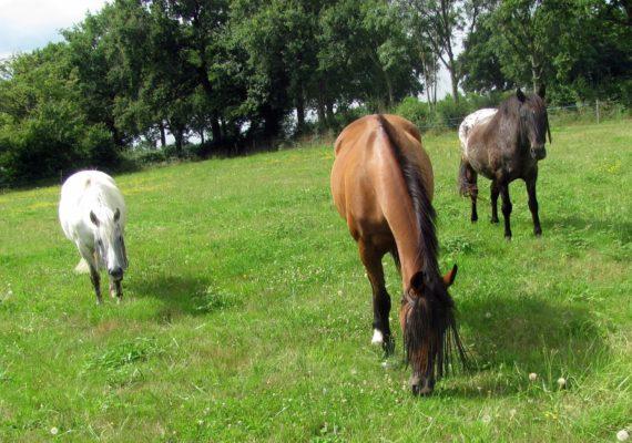 equitationreigny1