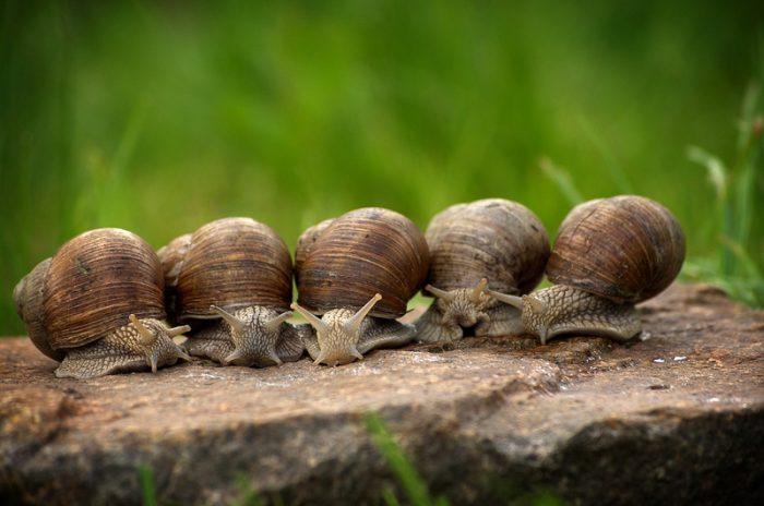 Escargots – Cluis en Berry – Indre