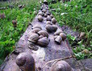 escargots le jacquin_opt