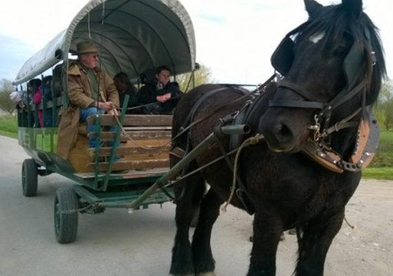 ferme-des-buttons-en-chariot