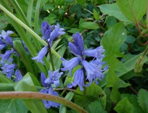 Flore du canal