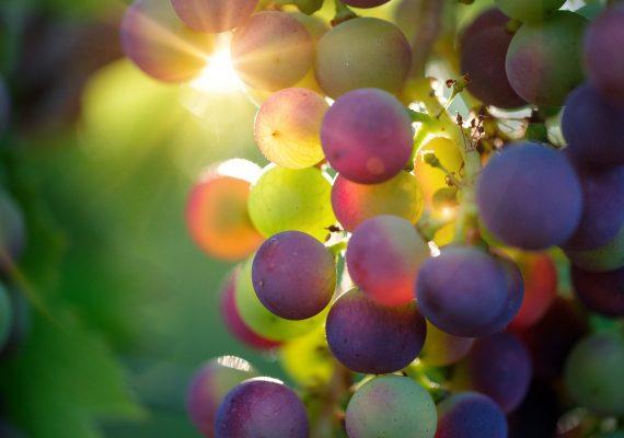 grapes-3550733-1920-2