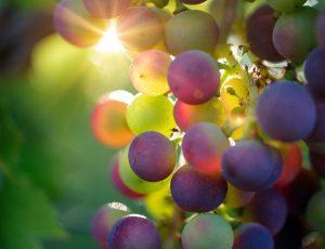 grapes-3550733-1920-4