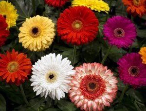 horticulture horticole fleur
