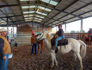 Ecurie de propriétaire, équitation western